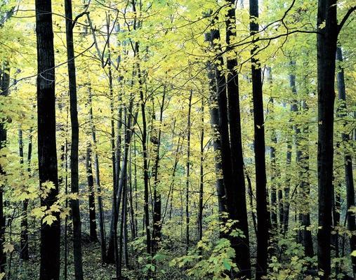 Mixed Hardwood Trees, Wisconsin | Animals, Habitats, and Ecosystems