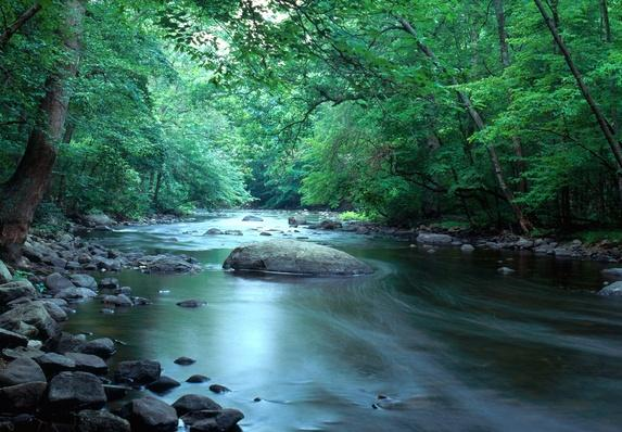 Musconetcong River in Stephens State Park | Animals, Habitats, and Ecosystems