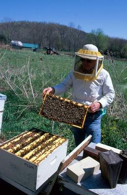 Beekeeper With Bees | Earth's Resources