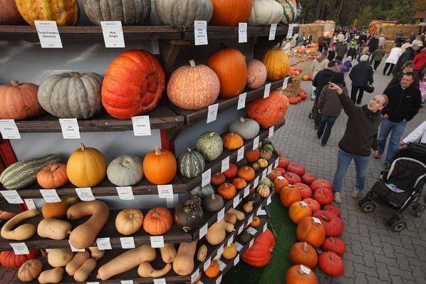 Autumn Is Pumpkin Season In Brandenburg | Agriculture and Forestry