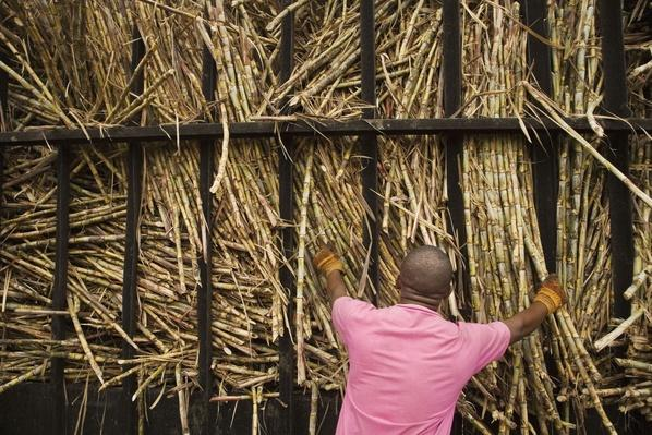 Sugar Cane Factory - La Romana, Dominican Republic | Earth's Resources