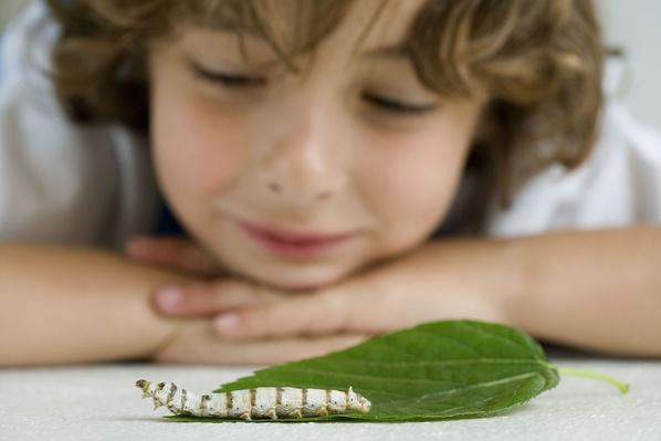 Boy With Silkworm | Earth's Resources