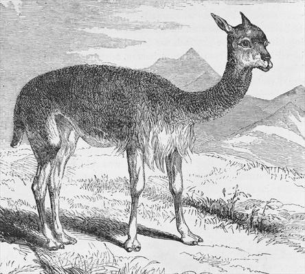 The Vicuna at the Rio de Azufre, from 'Incidents of Travel and Exploration in the Land of the Incas' by E. George Squier, pub. in 1878
