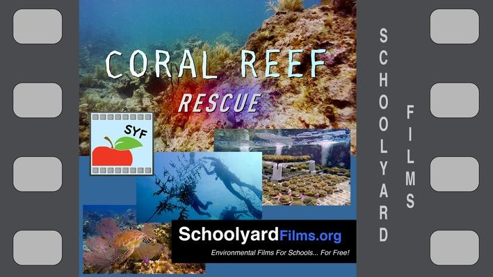 Coral Reef Rescue K-8