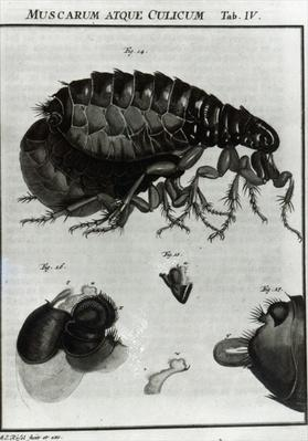 Table IV of Flies and Fleas