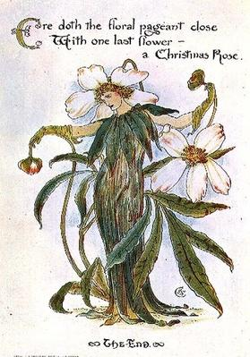 Illustration showing a fairy as a Christmas Rose