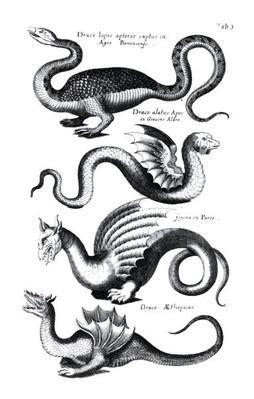 Four types of dragon