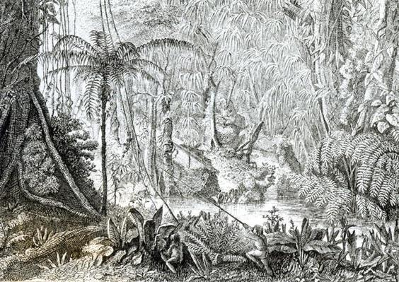 Interior of a Primeval Forest in the Amazons