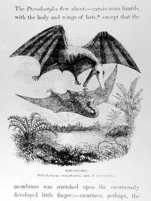 Bat-Lizards