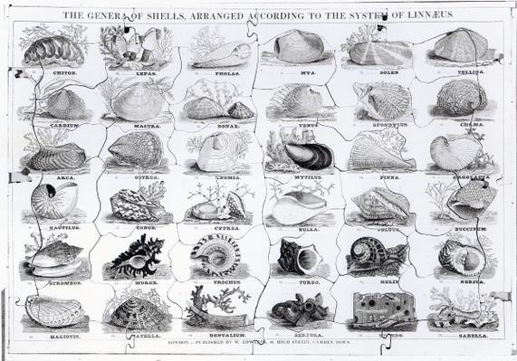Genera of Shells jigsaw, pub. by W. Edwards