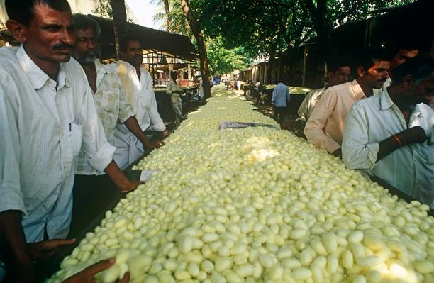 Traders Stand By Long Trays of Silkworm Cocoons | Earth's Resources