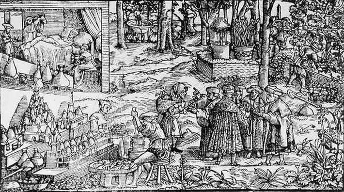 Medical Herb Cultivation, 1531