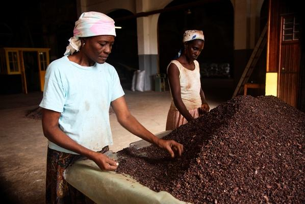 Working With Cocoa | Earth's Resources