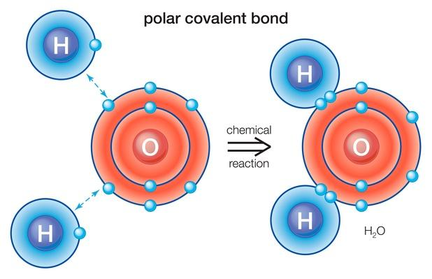 Polar covalent bond | Science and Technology