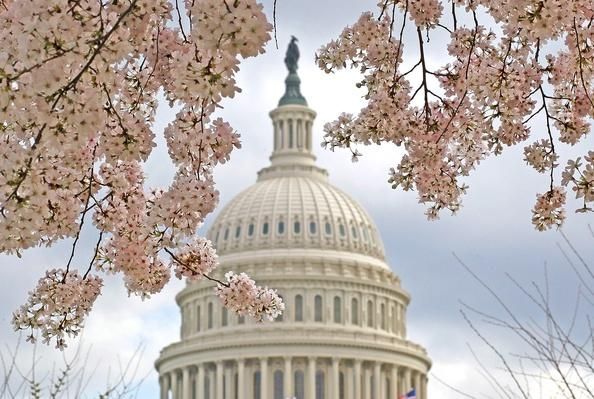 Cherry Trees In Bloom In Washington DC | Weather