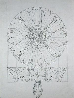 Study for a Cornflower, 1808