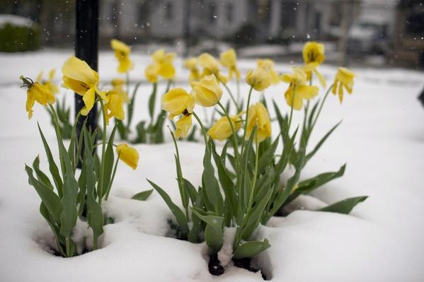 April Storm Dumps Snow Across Northeastern U.S | Weather