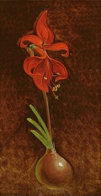 Amaryllis Formosissima, 1808