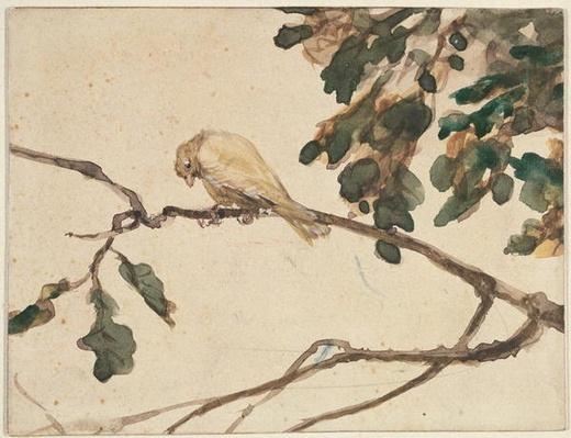Canary on an Oak Tree Branch