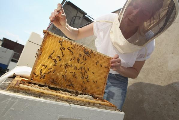 Urban Beekeeping Growing In Popularity | Agriculture and Forestry