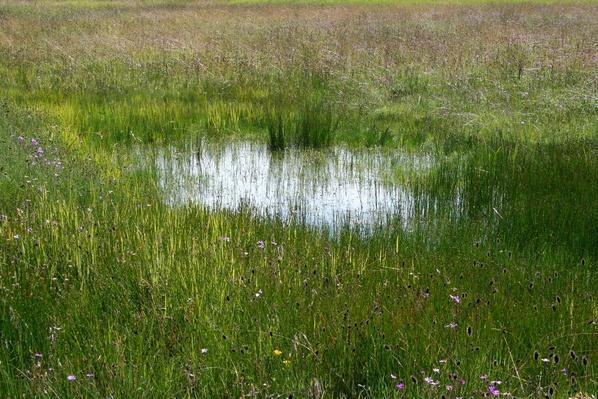 Lesotho Marshlands   Earth's Surface