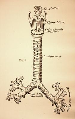 Antique Medical Illustration , Throat | Science and Technology