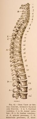 Human Spine | Science and Technology