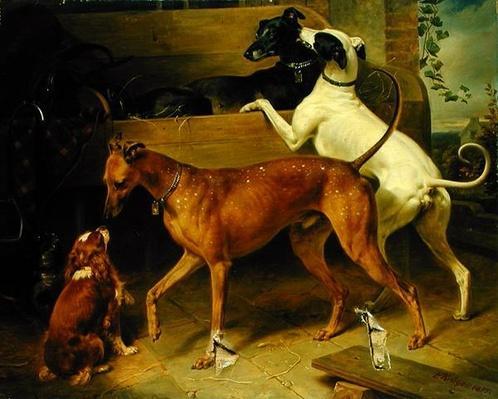 Kruger's Dogs, 1855