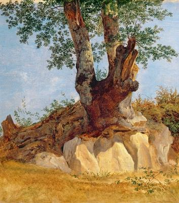 A Tree in Campagna, 1822-23