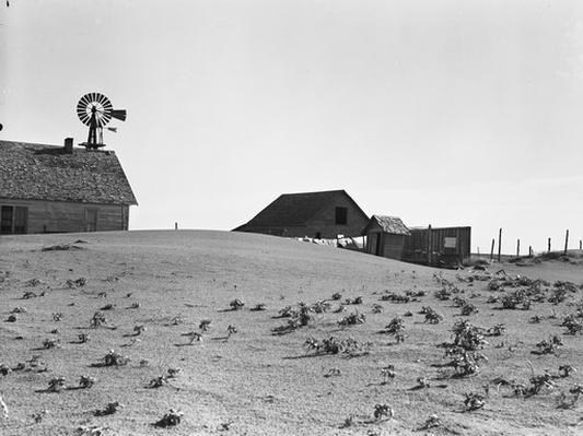Sparse Vegetation in Field | Ken Burns: The Dust Bowl