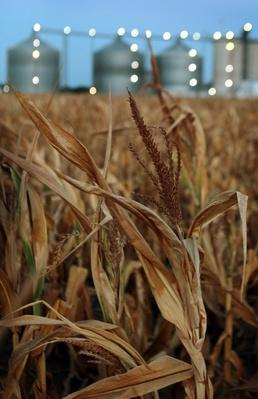 Ethanol Industry Threatened By Midwest Drought | Agriculture and Forestry