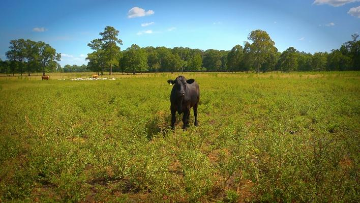 Teachable Moment: The Serengeti Plains Rotational Grazing Model