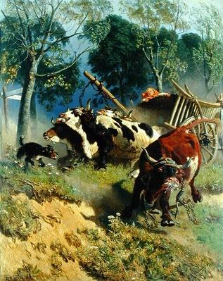 The team of oxen breaks loose