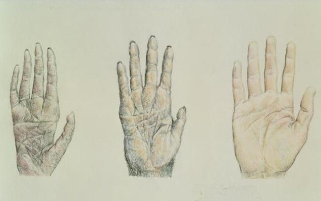 Hands of a primate and a human