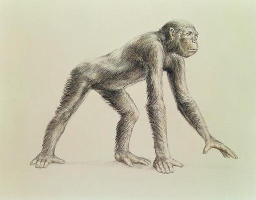 Dryopithecus Africanus
