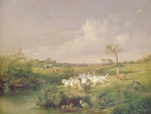 Geese Grazing, 1854