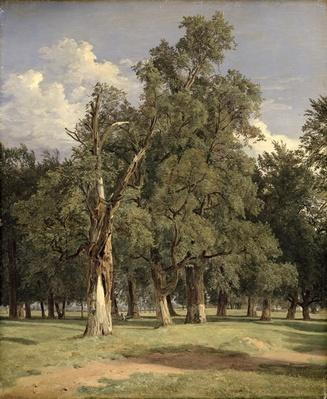 Elm trees in Prater, 1831