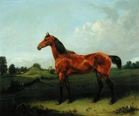 A Bay Horse in a Field