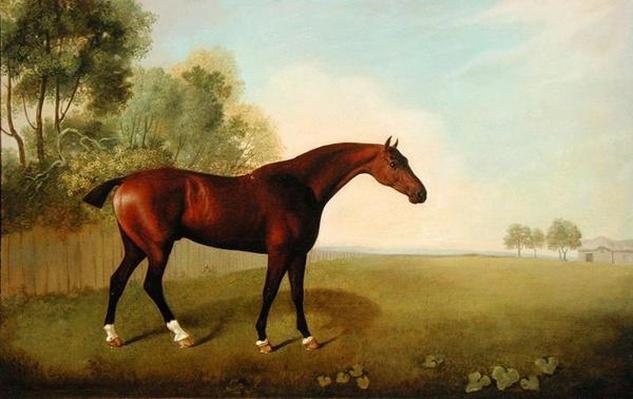 A Bay Horse in a Field, 1778