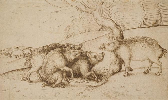 The Boar Family