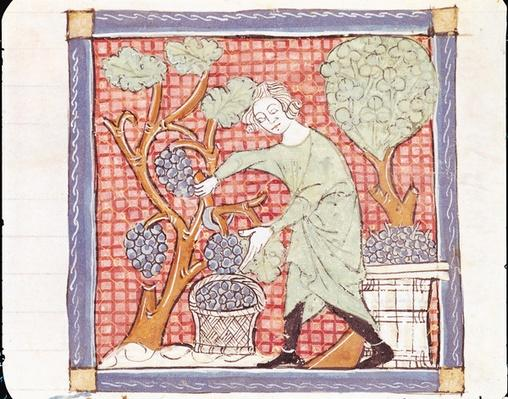 Fol.59r September: The Harvest