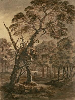Forest Scene, A Giant Scots Fir and Forest Glade, 1771