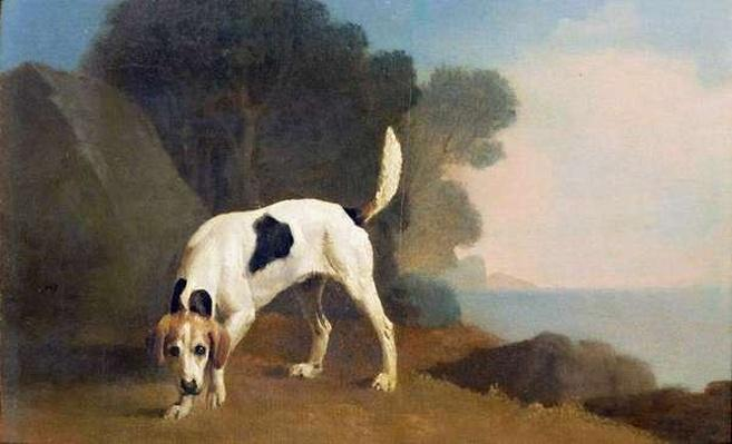 Foxhound on the Scent, c.1760