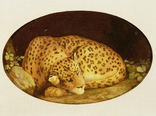 Sleeping Leopard, 1777