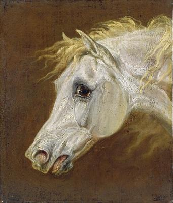 Head of a Grey Arabian Horse