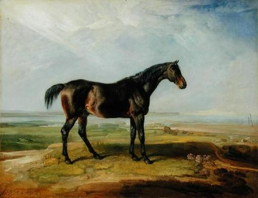 Dr. Syntax, a bay racehorse, standing in a coastal landscape, an estuary beyond