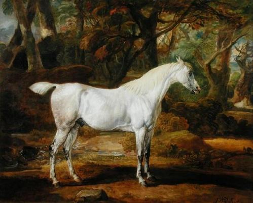 A Grey Arabian Stallion, the Property of Sir Watkin Williams-Wynn, c.1815-20