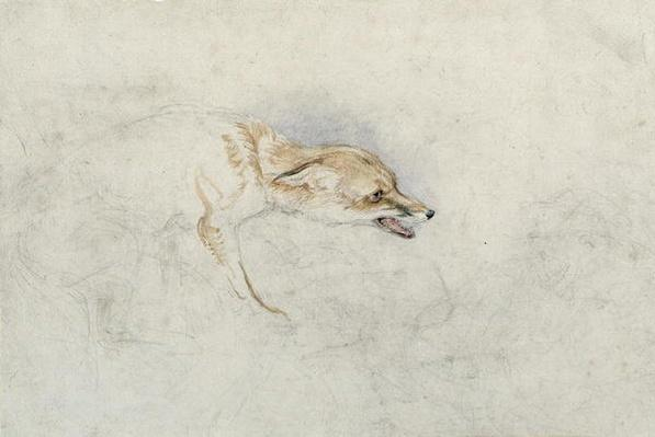 Study of a crouching Fox, facing right verso: faint sketch of fox's head and tail