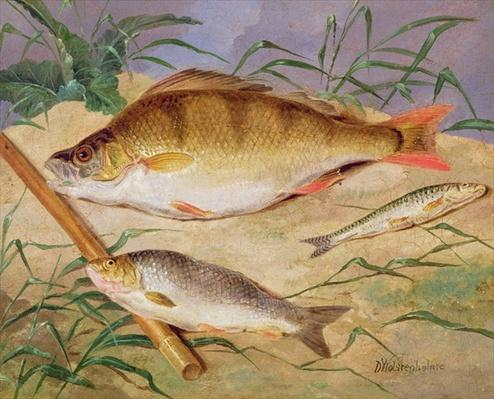 An Angler's Catch of Coarse Fish