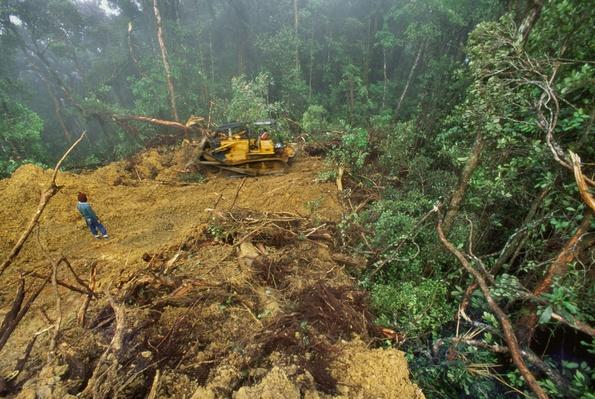 Bulldozer Grading Logging Road in Rainforest, Sabah, Borneo | Earth's Surface